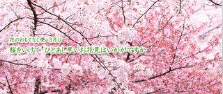 201503_photo_sakura.jpg
